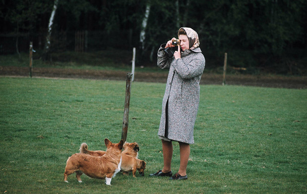 Фото №3 - Собаки ее величества: за что королева Елизавета любит корги
