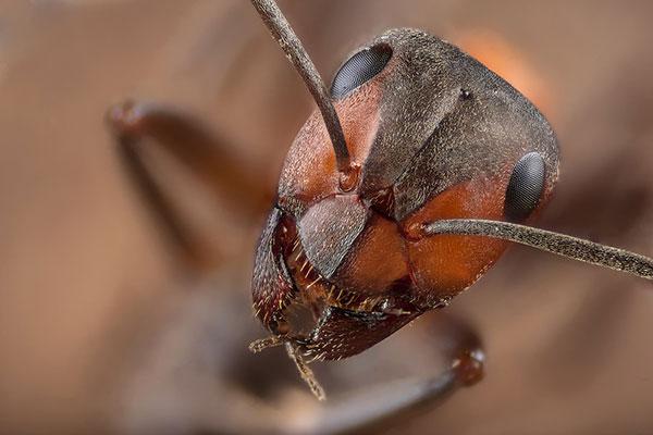 Фото №3 - Как защитить ребенка от летних насекомых