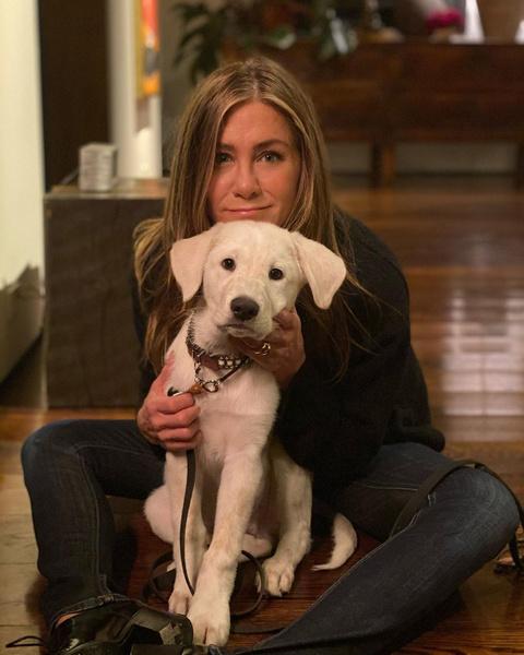 <p>Дженнифер Энистон провела День Благодарения со своей собакой Лордом Честерфилдом </p>