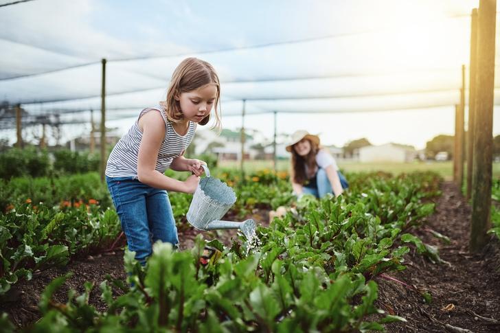 Фото №2 - Для хорошего урожая: 5 вещей, которые нужно сделать в саду в июле