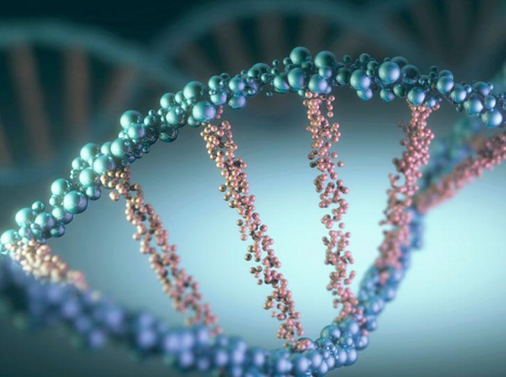 Фото №3 - Генетическое омоложение: исследователь Лиз Пэрриш стала на 20 лет моложе