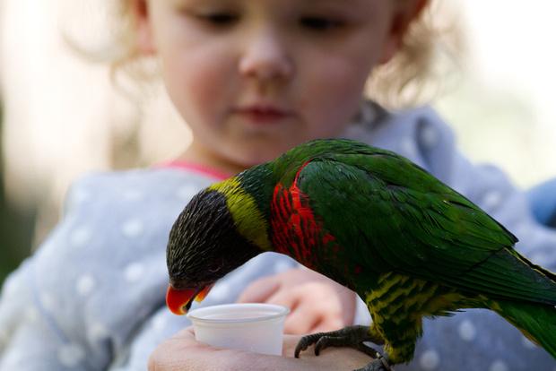Фото №2 - Чем нас могут заразить животные?