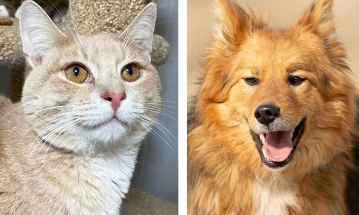 Фото №1 - Котопёс недели: кот Хумус и собака Лиса