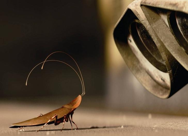 Фото №2 - Правда ли что тараканы могут выжить после ядерного взрыва