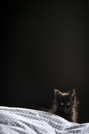Фото №5 - К чему снятся котята: что говорят сонники и психологи