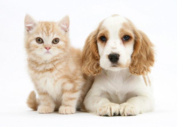Фото №1 - Животные в семье: правила игры