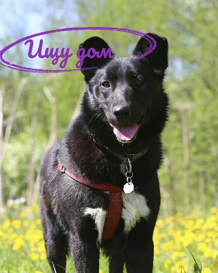 Фото №2 - Котопёс недели: собака Джульетта и кошка Папайя
