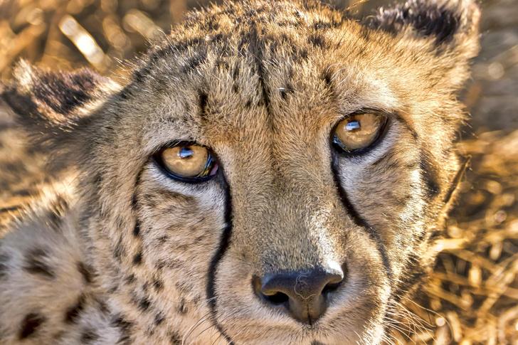 Фото №1 - Зафиксирован первый случай сибирской язвы среди диких животных в Намибии