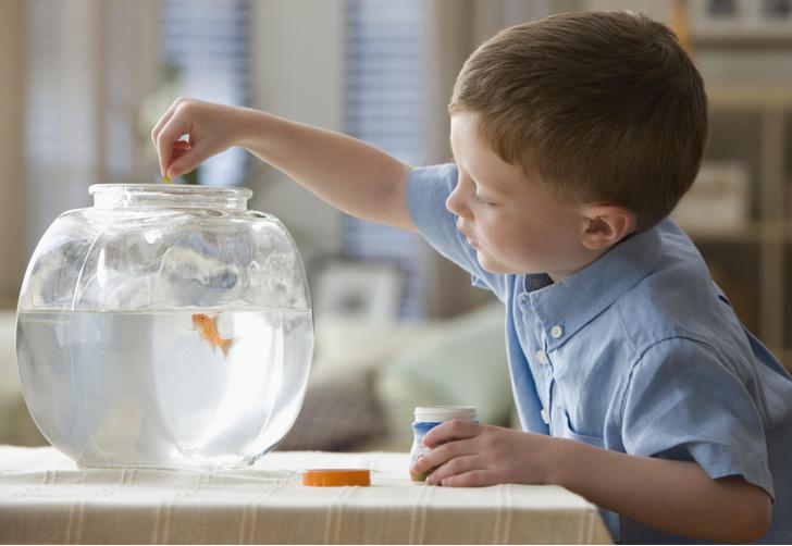 Фото №3 - Ребенок просит питомца: кого завести, если малыш— аллергик