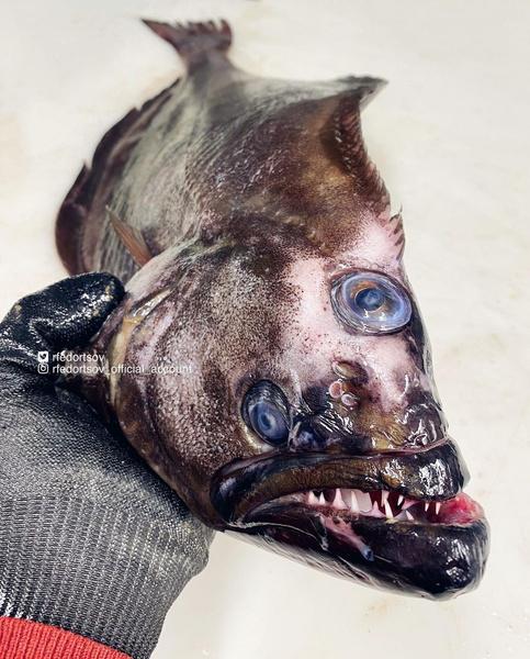 фото жуткой рыбы