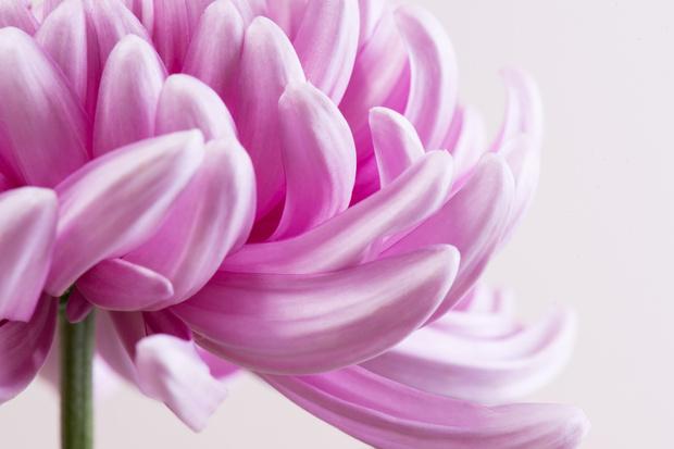 Фото №7 - Узнай, какой ты цветочек по дате рождения