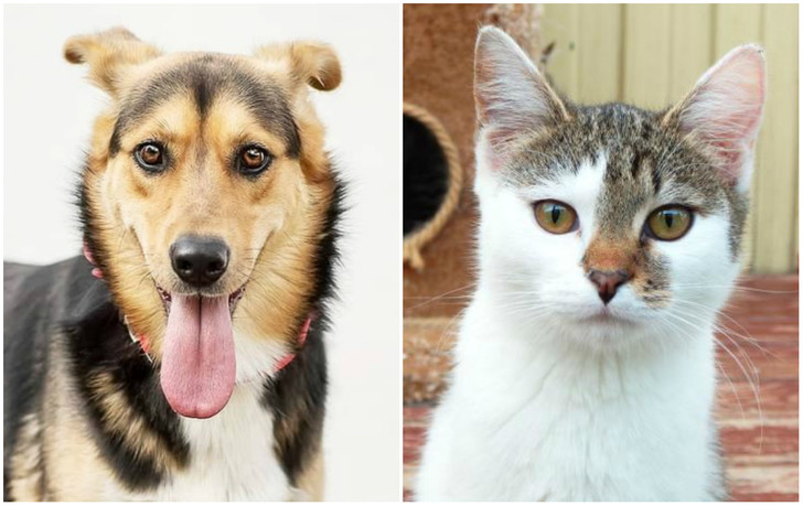 Фото №1 - Котопёс недели: собака Вишня и кошка Вафелька