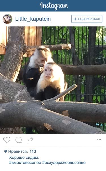 Фото №3 - Если бы у зверей был «Инстаграм»: 20 блогеров из зоопарка