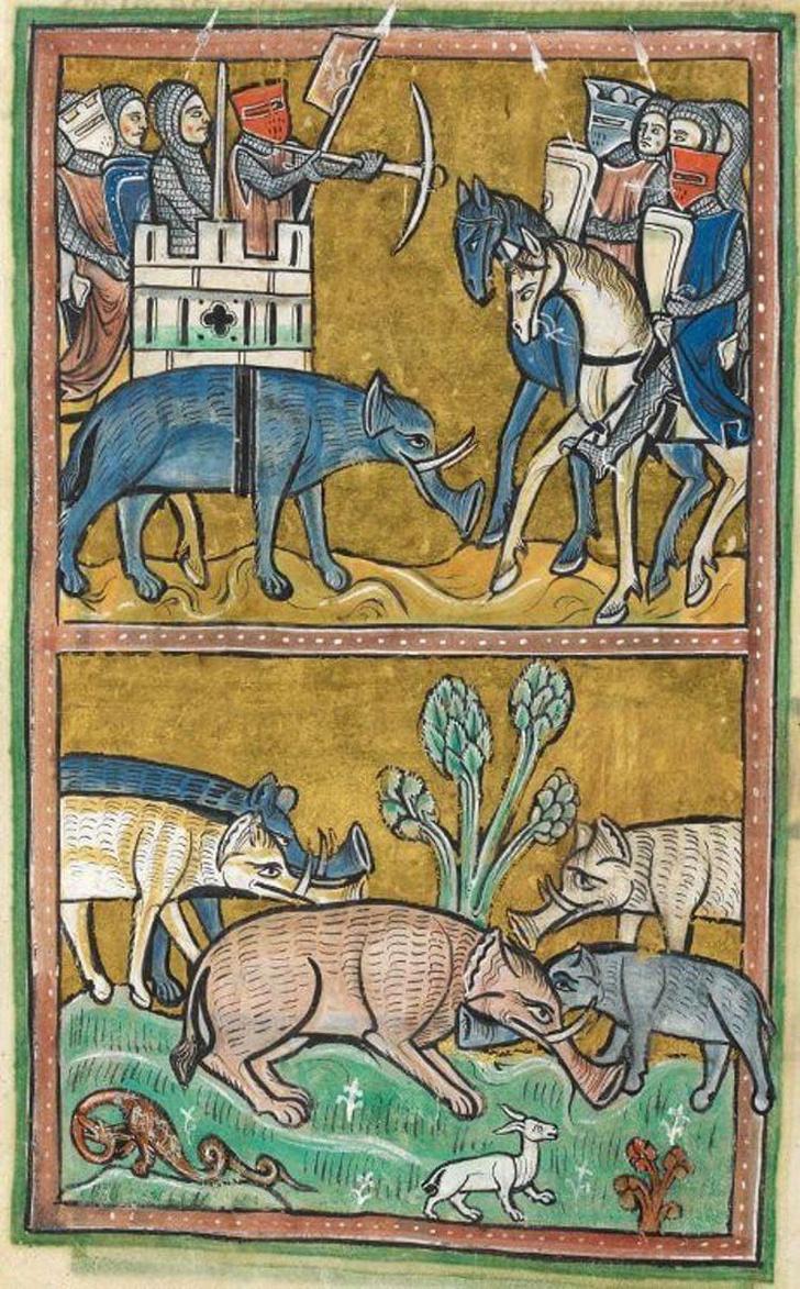 Фото №4 - Как в старину художники изображали животных, которых никогда не видели (25 странных существ)