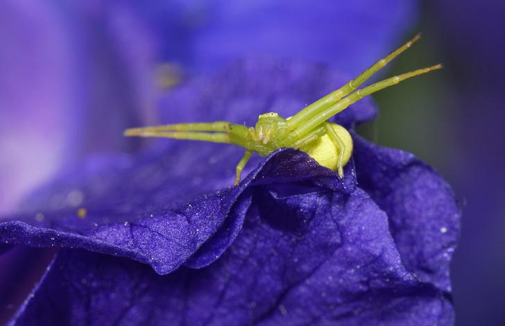 Фото №2 - Зачем людям пауки? 3 удивительных причины