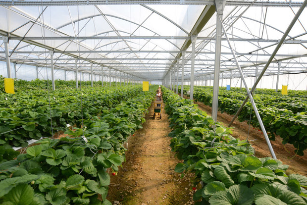 выращивание в домашней теплице