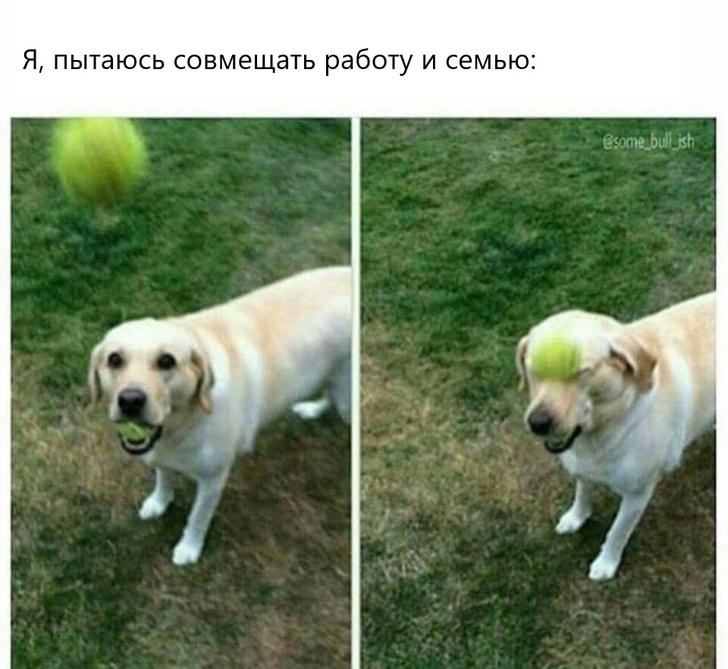 Фото №8 - Лучшие шутки и мемы про взрослую жизнь