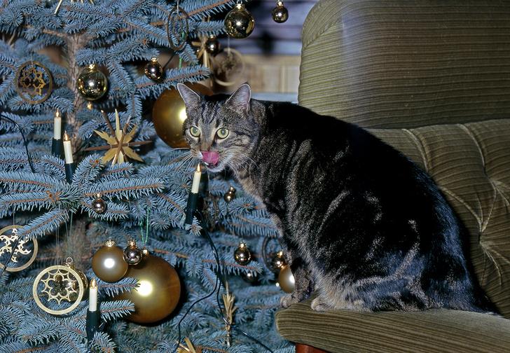 Фото №1 - Как защитить новогоднюю елку от кота: 7 самых хитрых способов с фотоинструкцией