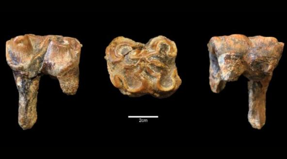 Фото №1 - Бегемоты бродили по Британским островам миллион лет назад