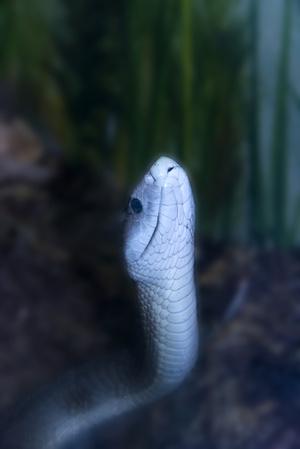 Фото №5 - К чему снятся змеи: что говорят сонники и психологи