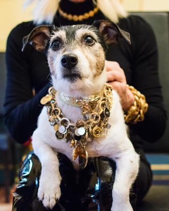 Фото №6 - Фэшн-дизайнеры и их собаки. Заряжено на лайки!