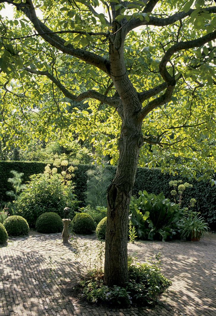 Фото №3 - ТОП-5 вопросов читателей на тему сада