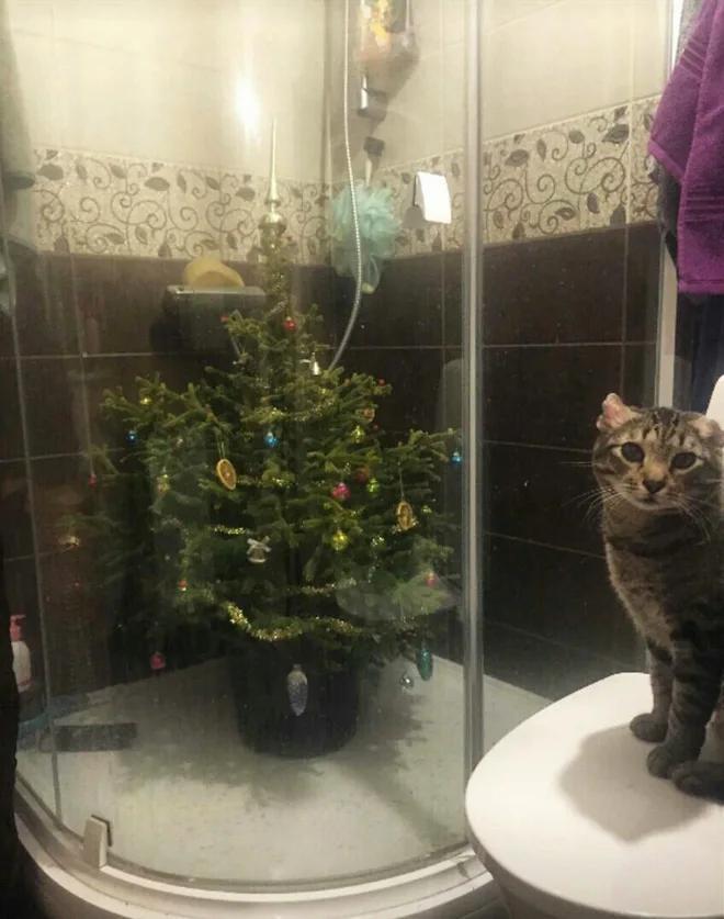 Фото №16 - Как защитить новогоднюю елку от кота: 7 самых хитрых способов с фотоинструкцией