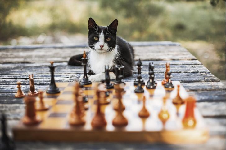 Фото №1 - Как измерить IQ кота? (Исследование и тест)