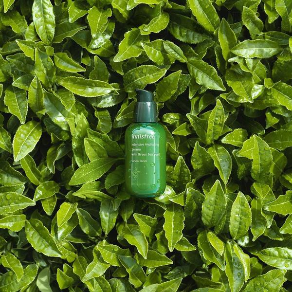Фото №2 - Почему в кремы и лосьоны для разных типов кожи так часто добавляют зеленый чай?