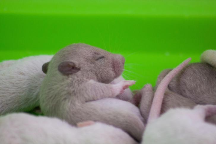 Фото №1 - Млекопитающим снятся сны еще в утробе матери