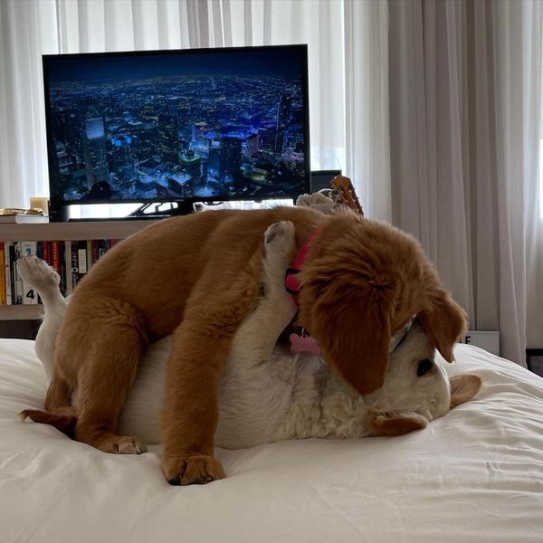 Фото №12 - Милоты пост: любимые собачки знаменитостей 🐶⭐
