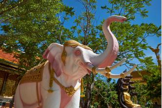 Фото №10 - Живые боги: каким животным поклоняются люди?