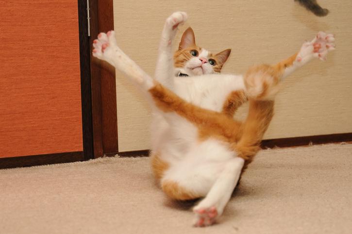 Фото №10 - 10 причин, почему у вас дома должен жить кот