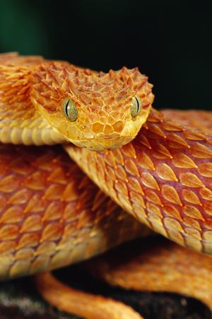 Фото №4 - К чему снятся змеи: что говорят сонники и психологи