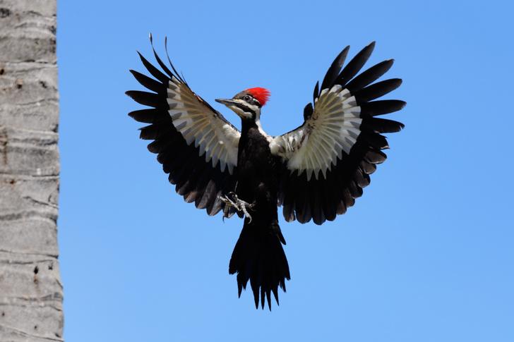 Фото №5 - По ком стучит дятел: 6 занимательных фактов о лесных птицах