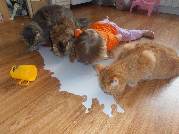 Фото №1 - 10 пород кошек, идеальных для семей с маленькими детьми