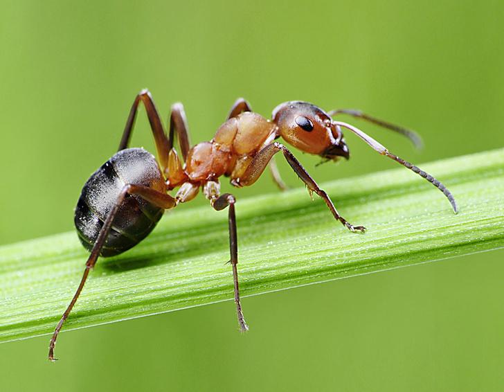 Фото №1 - Если муравья унести далеко от его муравейника, он погибнет или найдет новый?