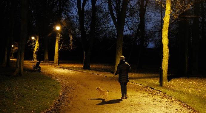 Неправильный номер и собака на дороге: две истории удивительного знакомства