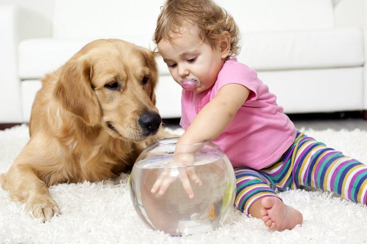 маленький ребёнок и собака в доме