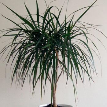 Фото №11 - Комнатные растения для ленивых