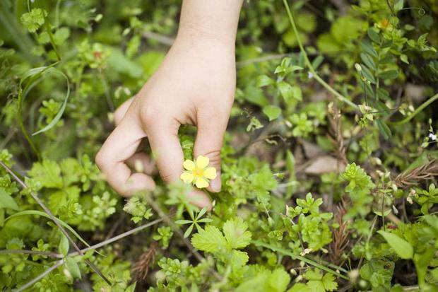 Фото №8 - Знать «врага» в лицо: ядовитые растения рядом с нами