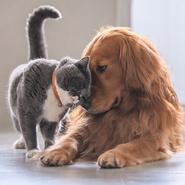 Какое животное вам ближе по темпераменту?