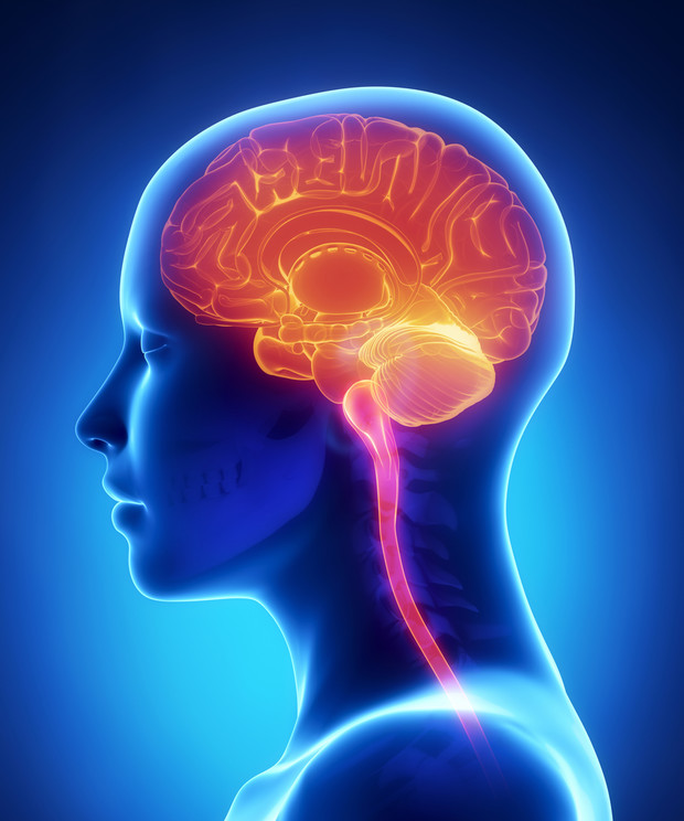 Фото №1 - Ученные утверждают, что наш мозг работает на 100%