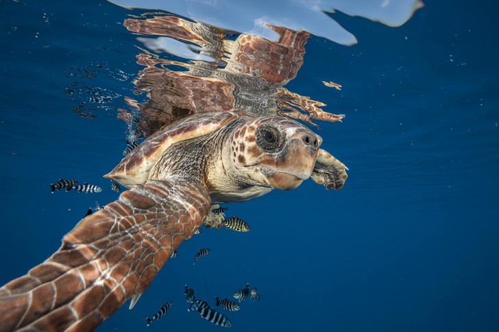 Фото №2 - Обойдемся без кислорода! Непревзойденные ныряльщики из мира дикой природы
