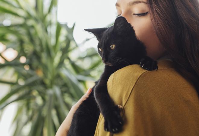Фото №1 - Ученые нашли доказательство тому, что кошки манипулируют людьми