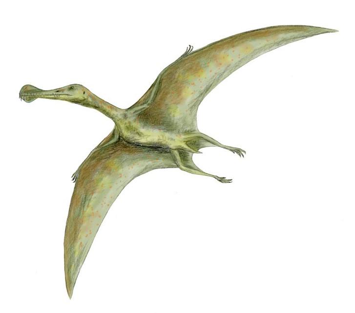 Фото №1 - Останки летающих ящеров обнаружили под Рязанью