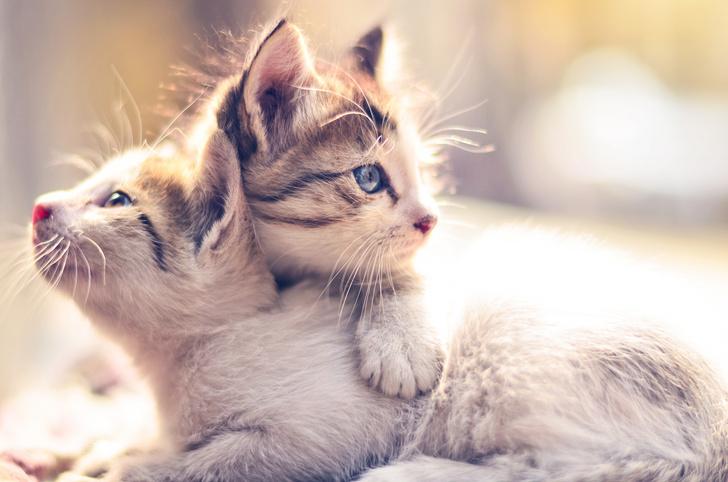 Фото №1 - Кот, просто кот: 101 кличка для питомцев