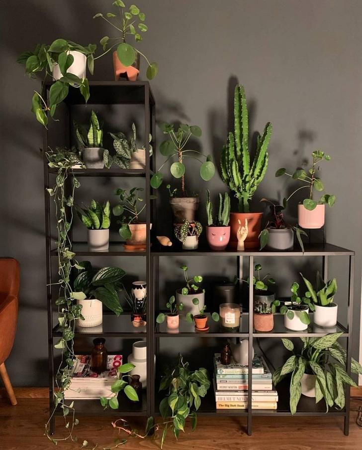 Фото №3 - Растения в интерьере: 7 идей для домашнего сада
