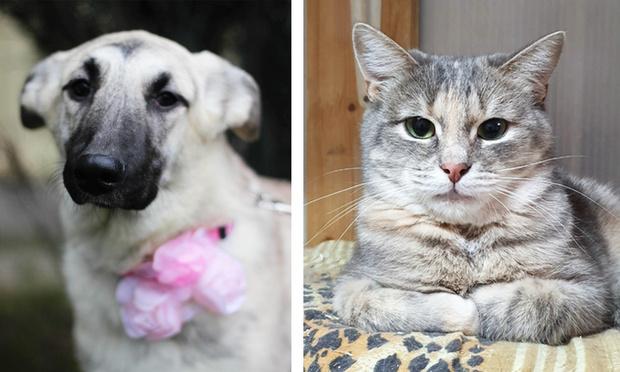 Фото №1 - Котопёс недели: кошка Мануэла и собака Элис