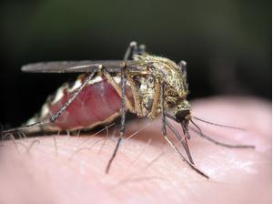 Фото №1 - Как защитить новорожденного от комаров?